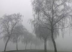 Brouillard givrant en Alsace bossue.