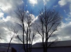 Parure  d' hiver sur fond d' automne....