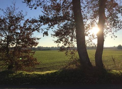Soleil matinal sur campagne moursoise