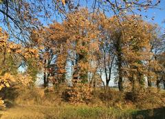 Feuillage d'automne à Mours sous ciel bleu