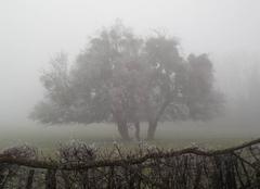 Brouillard en Val de Saône