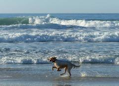 Qu'il est bon de courir sur la plage !