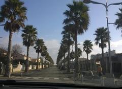 Les palmiers de Marseillan.