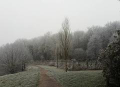Brouillard Brulon 72350 Arbres givrés
