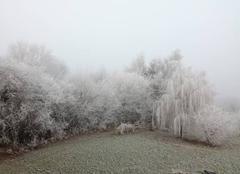 Brouillard Saint-Pierre-la-Cour 53410 Gelée matinale en Mayenne