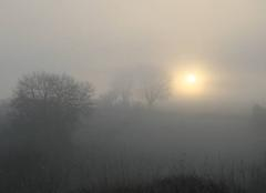 Brouillard Vivonne 86370 BROUILLARD D'HIVER