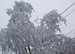 Le froid sibérien