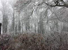 Brouillard Leigne-les-Bois 86450 Jour givré