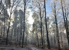 Ciel Baerenthal 57230 Altitude 300m sortie trail