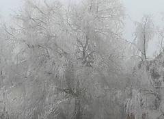 Froid Dhuizon 41220 Un vrai hiver