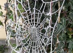 Froid Thaumiers 18210 Toile d'araignée