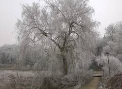Janvier. Le mois le plus obscurément blanc de la saison des froids.