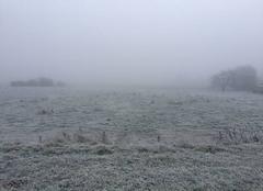 Brouillard givrant dans le Vexin