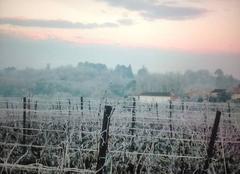 Un matin d hiver