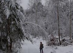 La forêt de Jeanmenil sous la neige