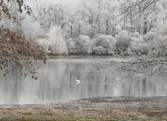 Héron et givre sur l'étang