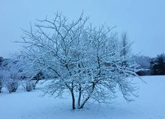 Neige Bubertre 61190 13 janvier
