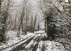 Forêt des Revolets