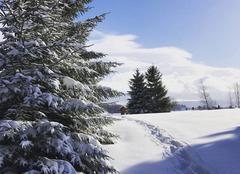 Neige et soleil