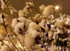 Végétation glacée