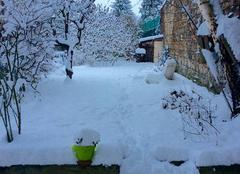 Neige Le Chambon-Feugerolles 42500 Jardin d'hiver