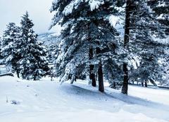 Neige Vivario 20219 Manteau blanc