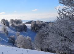 Ballon d'Alsace - La Gentiane