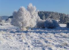 Neige Prunieres 48200 Magie de l'hiver en Lozère