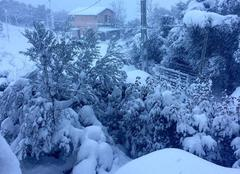 Neige Corte 20250 Corte sous la neige (route du fussadu)