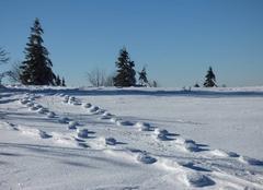 Empreintes dans la neige des vosges
