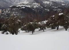 Granaghjola