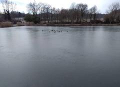 Froid Proissans 24200 étang gelé