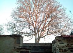 Ciel Canisy 50750 C est beau l hiver