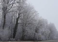 Brouillard Folgensbourg 68220 Givrants