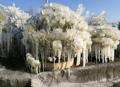 Vitalbonsai mes bonsai a -7°c