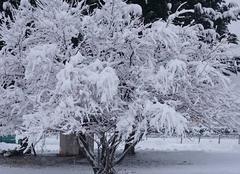 Neige Bagnols-les-Bains 48190  hiver 2017