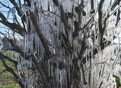 Froid Saint-Abraham 56140 L'arbre de glace