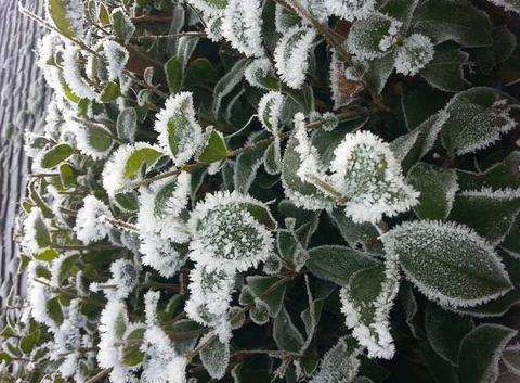 The winter frosts!