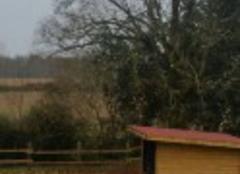 Poney et âne se protègent du vent
