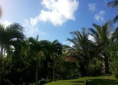 Ciel Schoelcher 97233 Sous les cocotiers