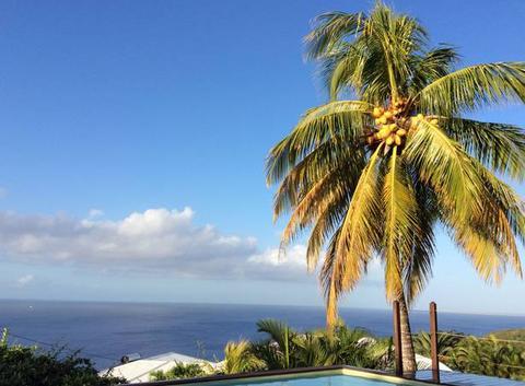 Colibris Caraibes