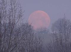 Coucher de lune rose