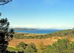 Un regard sur les vignes de la Baie de Pampelonne