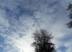 Temps   doux.....peut- étre   le   printemps....????