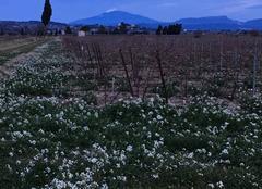 Ciel Sainte-Cecile-les-Vignes 84290 Ciel hivernal en Vaucluse