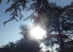 Soleil   voilé...... beau   ciel   bleu.....