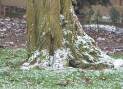 L'hiver au pied des arbres .