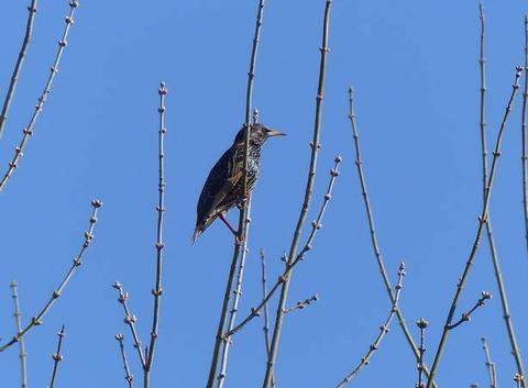 Le ciel est bleu, les arbres bourgeonnent. Seraient-ce les prémices du printemps ?
