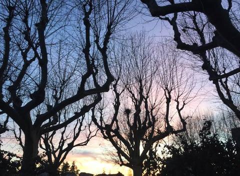Crépuscule sur les grands arbres du bord d'Isère