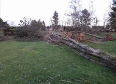 Tempête Noeux-les-Mines 62290 Arbre déraciné